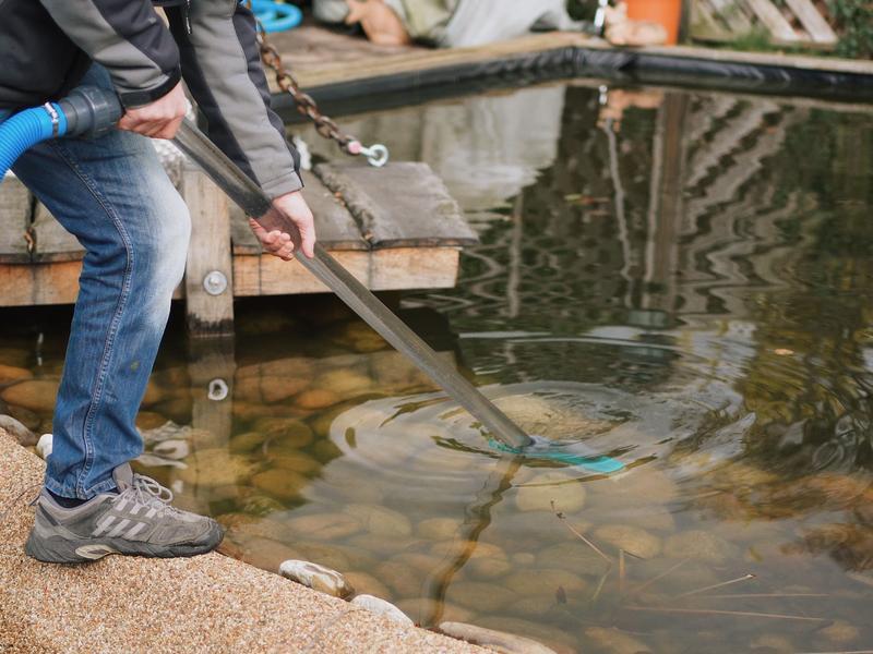 Teichreinigung - Fische