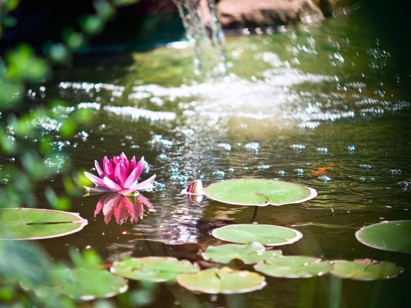 Der Teich im Sommer